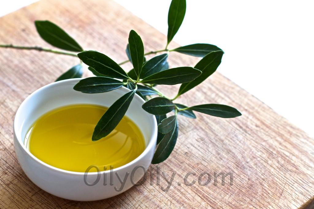 olive oil vs canola oil