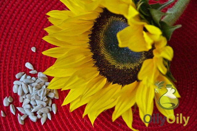 sunflower oil substitutes