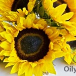 Not That Popular, but Truly Healthy! Sunflower Oil Benefits