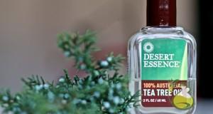 tea tree oil for lice