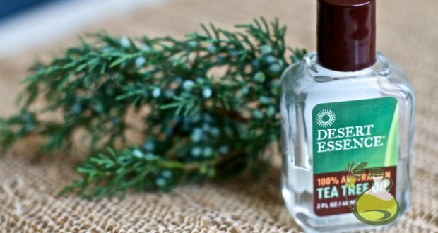 how to use tea tree oil for scalp sores