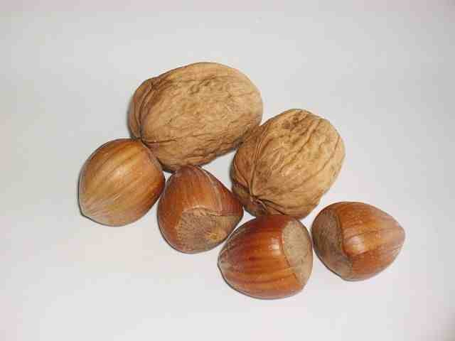Walnut Oil for Parasites