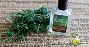 tea tree oil for gum disease