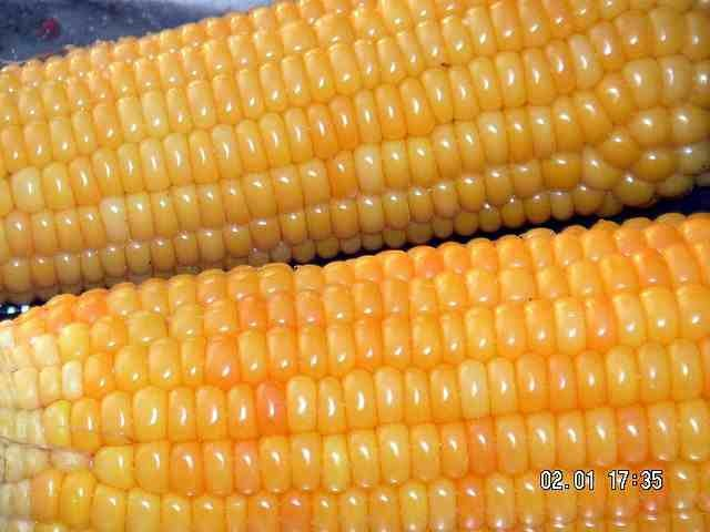 health benefits corn oil