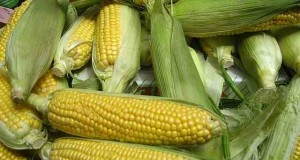 how to make corn oil