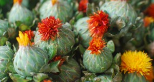 safflower oil benefits skin