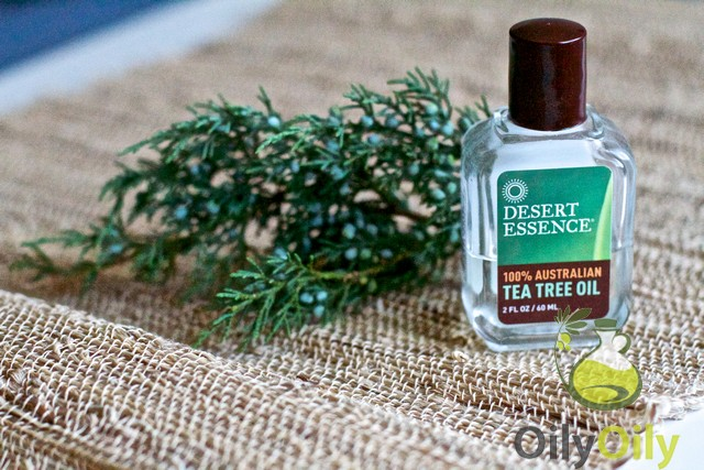tea tree oil for cats toxic or effective. Black Bedroom Furniture Sets. Home Design Ideas