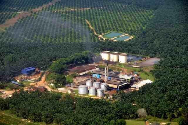 palm oil and health