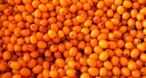 What is Sea Buckthorn Oil