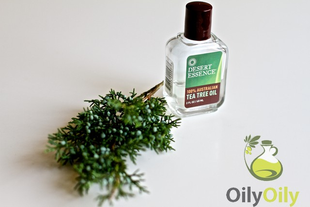tea tree oil and pregnancy