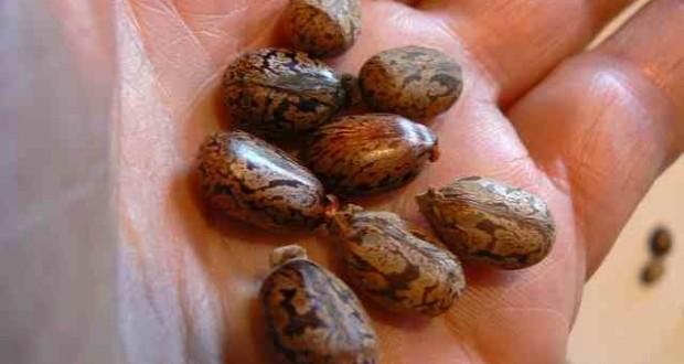 7 Jamaican Black Castor Oil Uses Oilypedia Com